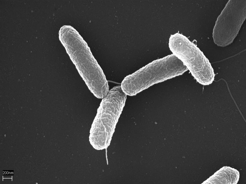 La bacteria Azotobacter podría sustituir a los plásticos convencionales.