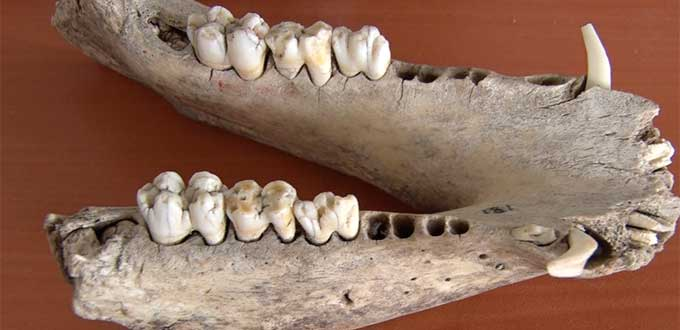 Encuentran yacimiento con huesos de mamut en SLP