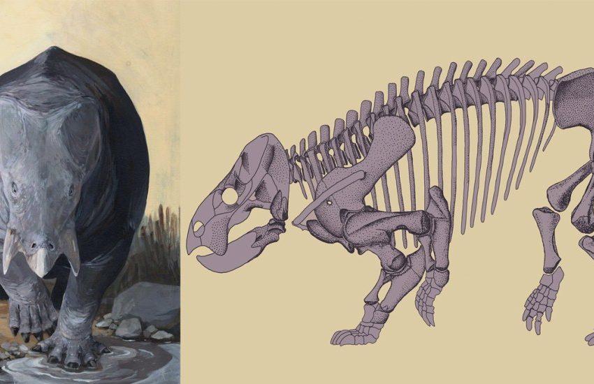 Descubren a gigantesco antepasado del rinoceronte y el hipopótamo